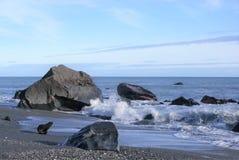 Dichtung auf Strand Stockfotos