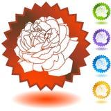 Dichtung eingestellt - Rosen-Blüte Stockbild