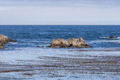 Dichtungs-Felsen mit Seelöwen bei einem 17 Meilen-Antrieb Lizenzfreie Stockfotografie