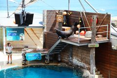Dichtungs-Show @ Taronga-Zoo Sydney Lizenzfreie Stockfotografie