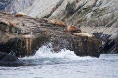 Dichtungslöwen auf felsiger Küstenlinie Stockfotografie
