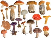 Diciannove accumulazioni dei funghi isolate su bianco Fotografia Stock