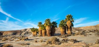 Diciassette palme Fotografie Stock
