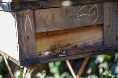 12, diciembre de 2016 - grupo de abejas en la entrada a la colmena en la fuga Dong Vietnam de Dalat- Imagenes de archivo