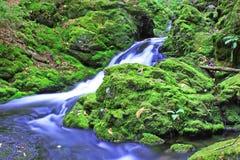 Grön Moss och kallt vatten Arkivbilder