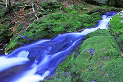 Brook in Fundy. Dickson Brook in Fundy National Park, located in New Brunswick, Canada Stock Photo