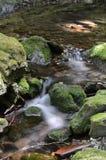 Dickson Brook, parco nazionale di Fundy, Nuovo Brunswick, Canada Immagini Stock Libere da Diritti