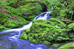 Green Moss and Cold Water Stock Images