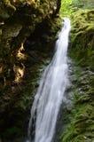 Dickson Falls Fundy nationalpark Royaltyfri Fotografi