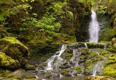 Dickson Falls (tempo di otturazione lento) Immagini Stock Libere da Diritti