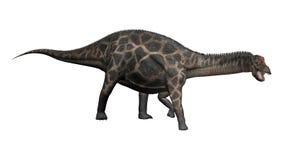Dicraeosaurus de dinosaure du rendu 3D sur le blanc Photo libre de droits