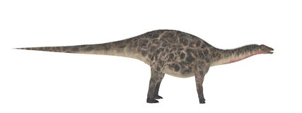 Dicraeosaurus Isolado do dinossauro no branco ilustração royalty free