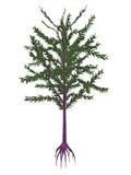 Dicroidium史前种子植物- 3D回报 库存例证