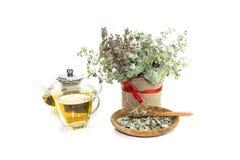 Dictamnus utile dell'origano della pianta che cresce soltanto in Creta Grecia fotografie stock