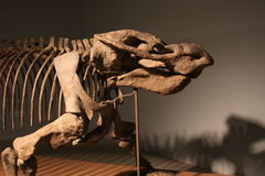 Dicynodont Royalty Free Stock Photos