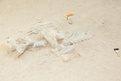 Dicynodont Dinosaur Bones Excavation - Argentina. Dicynodont Dinosaur Bones Excavation in Argentina Stock Photos