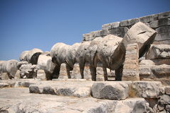 Didim Apollo temple column royalty free stock images