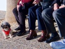 Die älteren Leute sitzen auf einer Bank einen kleinen Hund aufpassend lizenzfreies stockfoto
