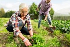 Die älteren Paare, die im Garten oder am Sommer arbeiten, bewirtschaften stockfotografie