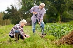 Die älteren Paare, die im Garten oder am Sommer arbeiten, bewirtschaften lizenzfreie stockfotografie