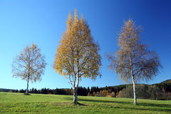 Die Änderungen des Herbstes Lizenzfreies Stockbild