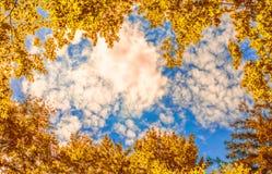 Die Überdachung von den Herbstbäumen, die einen klaren blauen Himmel gestalten Stockfotografie