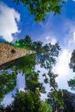 Die Überdachung von den hohen Bäumen, die einen klaren blauen Himmel gestalten Stockfotografie