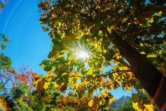 Die Überdachung von den hohen Bäumen, die einen klaren blauen Himmel gestalten Lizenzfreie Stockfotos