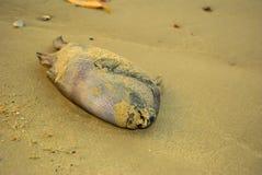 Die Überreste von toten Fischen Lizenzfreies Stockbild