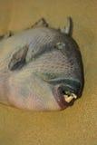 Die Überreste von toten Fischen Stockfotos