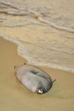 Die Überreste von toten Fischen Stockfotografie