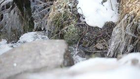 Die Abbildung wird im frühen Herbst in den Bergen polar gebildet stock footage