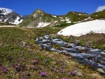 Die Abbildung wird im frühen Herbst in den Bergen polar gebildet Lizenzfreies Stockfoto
