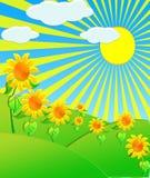 Die Abbildungsonnenblumen auf Wiese Lizenzfreies Stockfoto