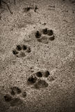 Die Abdrücke des Hundes auf dem Strand Stockbild