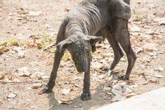 Die abstoßenden Hunde und das unbehaart lizenzfreies stockfoto