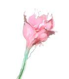 Die abstrakte Blume, die von gefärbt gemacht wird, spritzt, lokalisiert auf Weißrückseite Stockbild