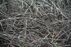 Die abstrakten Muster der Mangrove in Pranburi, Prachuab Khiri Khan Lizenzfreies Stockfoto
