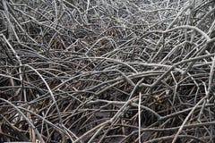 Die abstrakten Muster der Mangrove in Pranburi, Prachuab Khiri Khan Lizenzfreies Stockbild