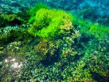 Die abstrakten Wasserpflanzen, die durch Oberfläche bei berühmtem Pupu gesehen werden, entspringen Stockfotografie