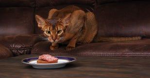 Die abyssinische Katze, die Fleisch von der Tabelle stiehlt, streicheln schlechtes Verhalten Stockbild