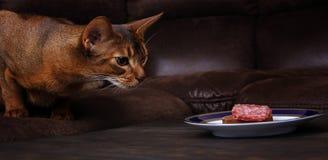 Die abyssinische Katze, die Fleisch von der Tabelle stiehlt, streicheln schlechtes Verhalten Stockbilder