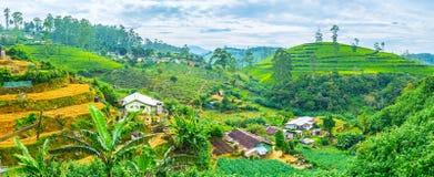 Die Ackerlande in Bergen Sri Lankan Stockbild