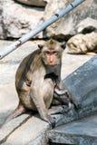 Die Affefamilie Lizenzfreie Stockbilder