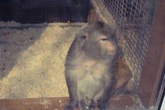 Die Affeleben im Zoo Stockbild