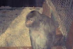 Die Affeleben im Zoo Stockfotos