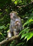 Die Affemutter und -baby Stockbilder