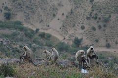 Die Affen Lizenzfreies Stockbild