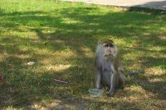 Die Affen im Park Stockbild