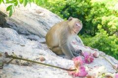 Die Affen leben im Tempel Stockbilder